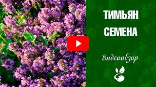 видео Тимьян