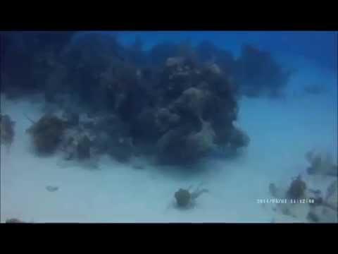 Grand Turk Diving 2014
