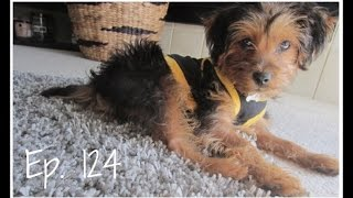 Ep. 124: Cute Puppy Clothing Haul