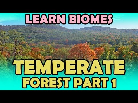 Temperate Forest - Part 1