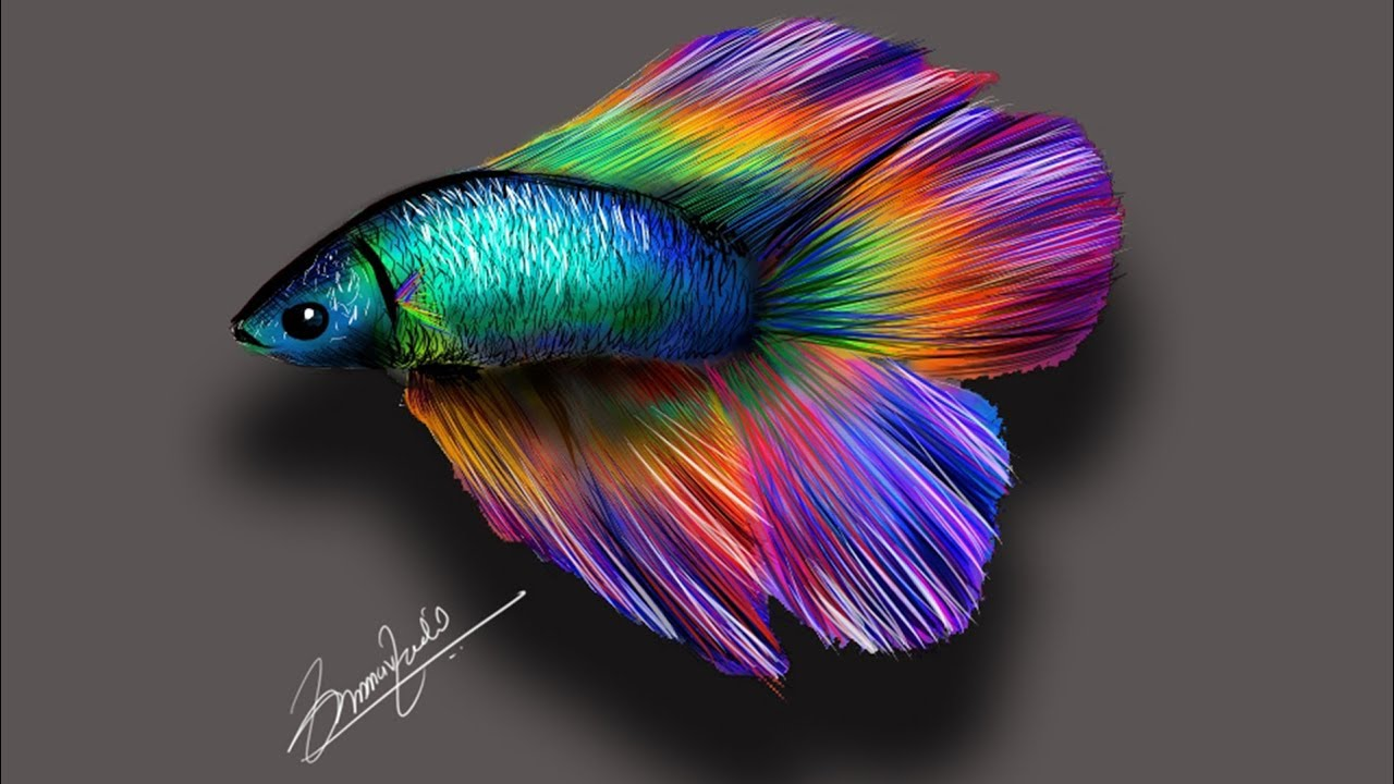 My first ever digital painting betta fish on corel for Betta fish painting