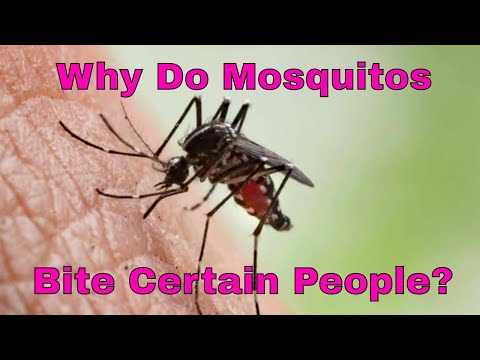 Why Do Mosquitos Bite Certain People?