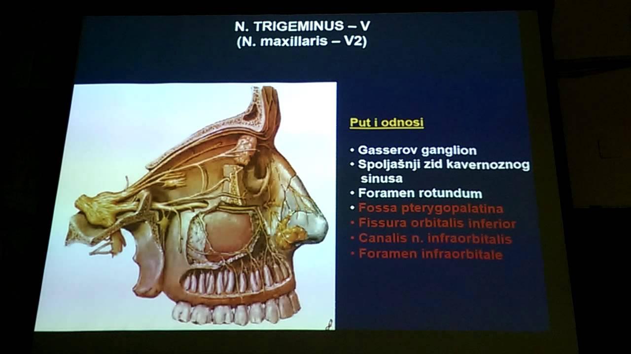 nervus trigeminus - YouTube