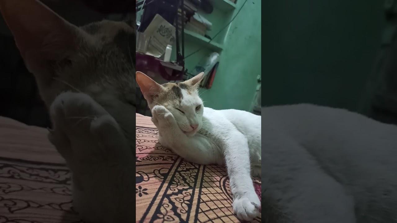 cat video #short #gdigaming #shortvideo #catshortvideo #shorts