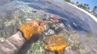 Pin Point Detecting - Cayman Islands Rocky Reef