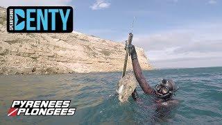 Chasse sous-marine d'une seiche Monstrueuse avec une séquence vidéo remarquable.