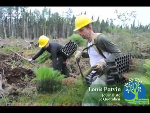 Confection des arbres en mottes dans nos p pini res doovi - Plantation arbre en motte ...