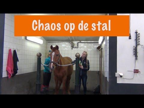 Chaos op de Stal| PaardenpraatTV