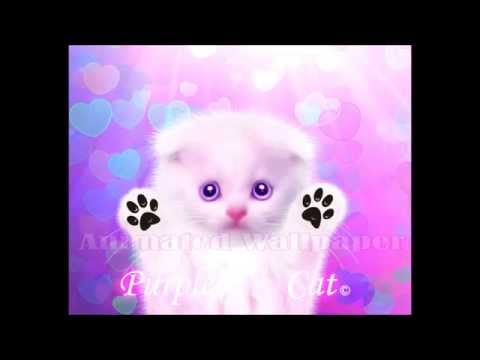 Live Wallpaper Animated Purple Cat