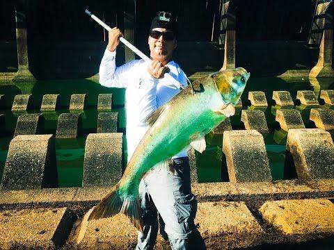 Catching Bighead Asian Carp