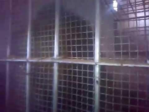 el kala lion zoo