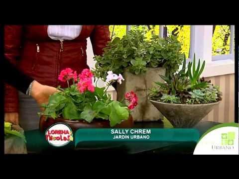 como sembrar plantas en maceta
