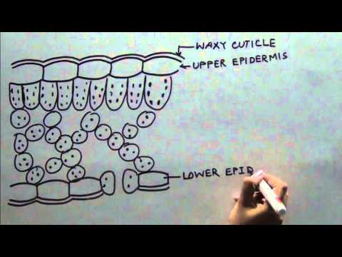 parts of a cell diagram 220 volt electric motor wiring cross section leaf class x - youtube