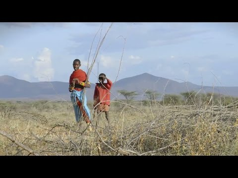 Plant Some Pawpaw and Lift A Goat: Surprising Ways to Combat Climate Change in Kenya