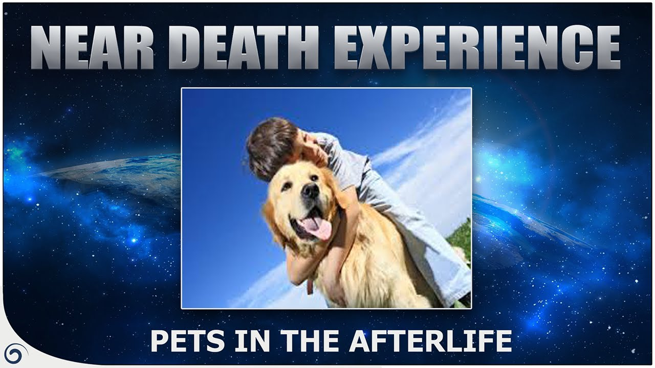 Animals In Heaven - ( Do Pets Go To Heaven?) - NDE Stories