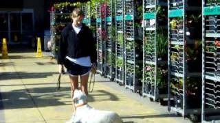 Dogtra E-collar/pager Collar Coooper Goes To Lowes
