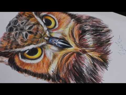 Pencil Colour Sketch Of An Owl Youtube
