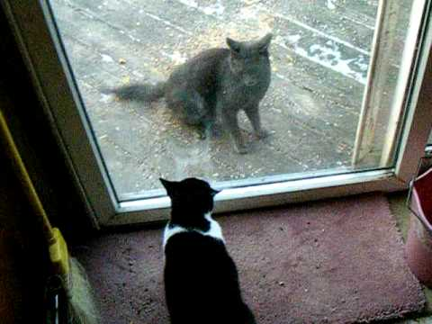 The two fighting cats