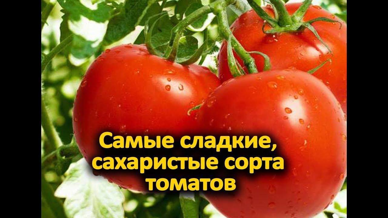 шоколадные сорта томатов для теплиц