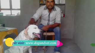 Dog fully recovered by Dr.Mishra treatment: dogandvet