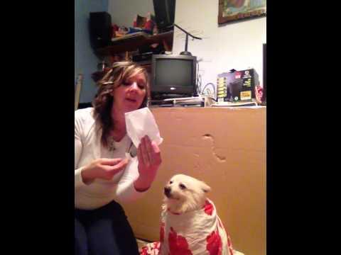 How to syringe feed a dog