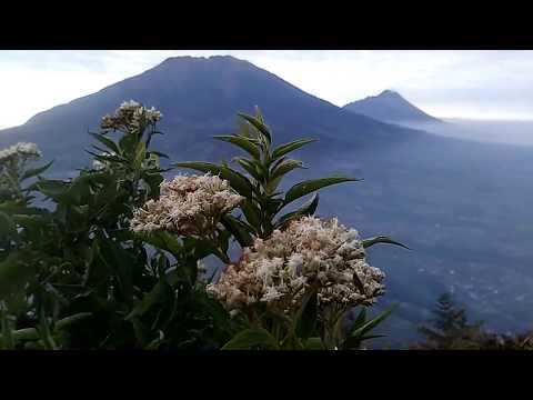 cantiknya-bunga-edelweis-di-gunung-andong,-cocok-untuk-video-pembuka