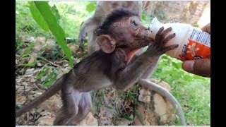Cute newborn monkey