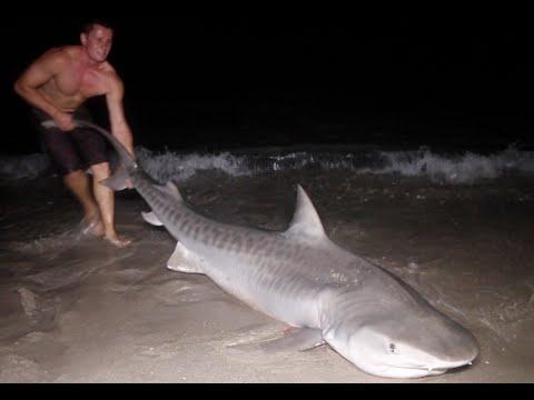 Taming The Tiger:  Land Based Shark Fishing!