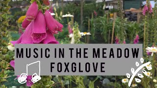 Foxglove - James Oswald