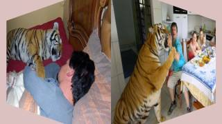 florida woman keeps tigers in her home