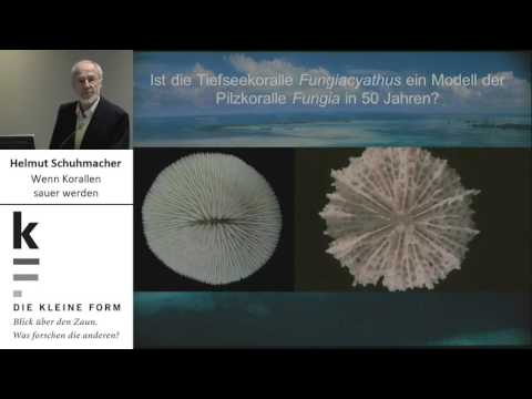 Prof. Dr. Helmut Schuhmacher (Biologie/Aquatische Ökologie)