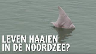 Leven haaien in de Noordzee? | De Buitendienst over haaien