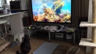 姉猫モモ(黒毛)は、NHK番組「さわやか自然百景」 のテーマ音楽が流れる...