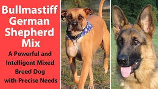 Bullmastiff German Shepherd Mix: A Powerful and Intelligent Mixed Breed Dog with Precise Needs