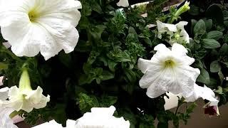 कम जगह में करें बागवानी का शौक पूरा vertical gardening से,vertical gardening for less space