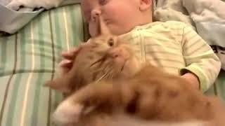 Дети-коты-нежность