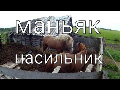 Живу как хочу/Конь- Маньяк-Насильник и бедная несчастная Лошадь-Кобылка/ Спариваются в загоне!