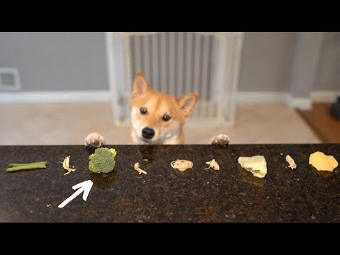 Tricking my Dog to Eat Vegetables.