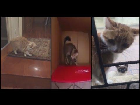 Cat Shenanigans --- CAT COMPILATION