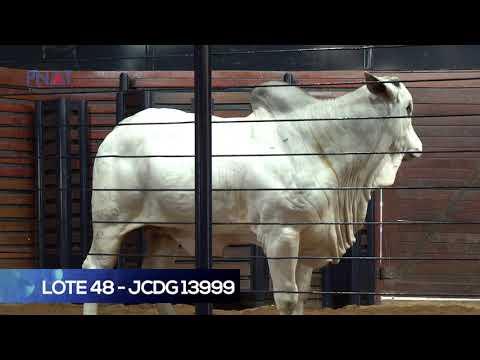LOTE 48 - JCDG13999 - NELORE