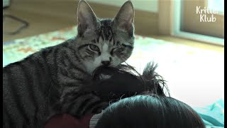Don't Worry If Your Cat Is Weird. These Cats In This Video Are Worse | Kritter Klub