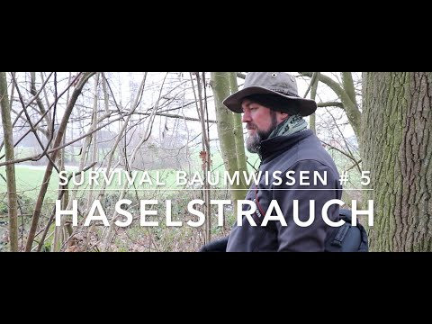 Survival Baumwissen # 5 - Haselstrauch