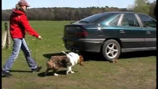 Blinder Hund Lernt Mantrailing