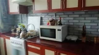 Ремонт кухни недорого. Пвх панели и ламинат на стены. Панели пвх на кухне.