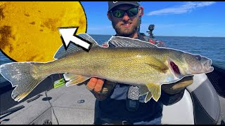 Catching TONS of ANGRY Shallow Water Walleyes!