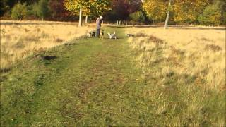 Cairn Terriers And Paddy The Irish Terrier At Clumber Park