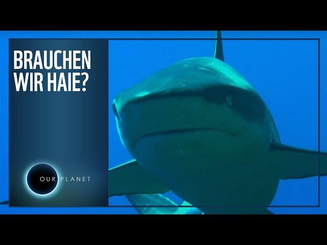 Brauchen wir Haie?   WWF Unser Planet