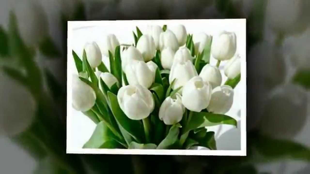 Виктор королев белые тюльпаны слушать песню онлайн или скачать.