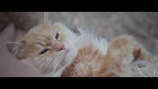 Кот. Когда жизнь удалась)))