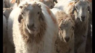 Central Sheep and Wool Research Institute-hindi